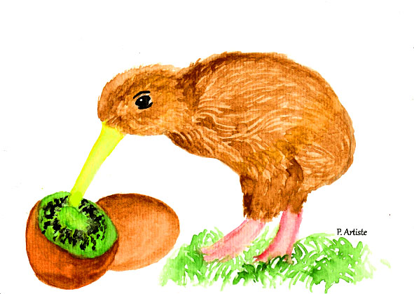 Illustration à l'aquarelle d'un kiwi (oiseau et fruit)